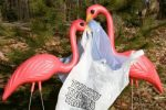 Palstic bag tax no. Flamingos yes!