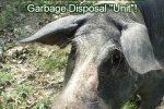 _garbage-disposal-unit