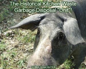 Image about Garbage Disposal.