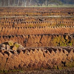 Image shows peat cut ready for use - peat free compost.