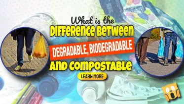 """Image text: """"What is degradable biodegradable and compostable""""."""